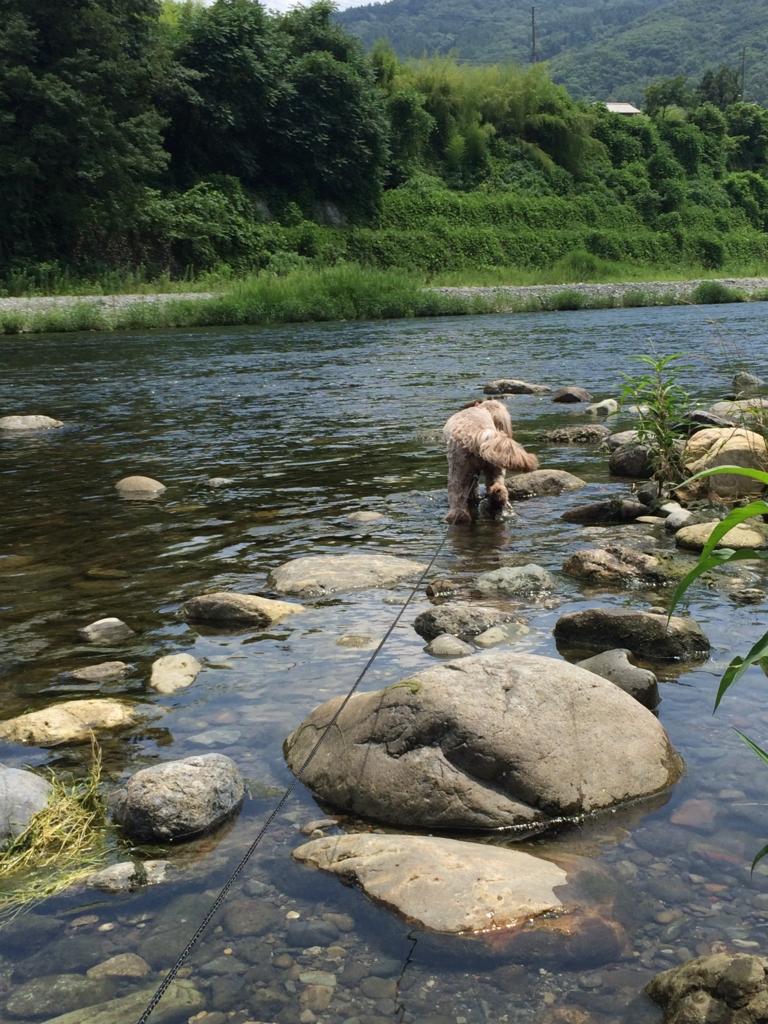 川に慣れてきたAL