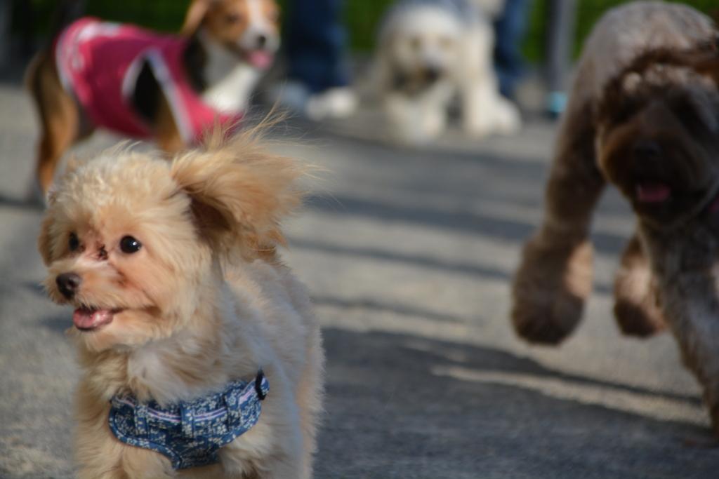かわいい犬を追いかけるAL