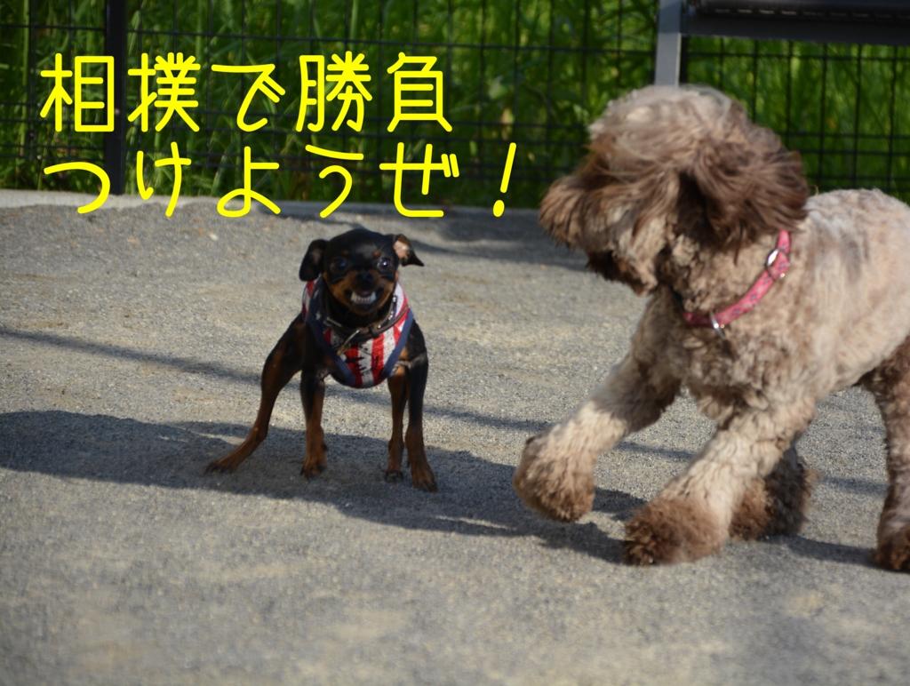 相撲を挑む犬