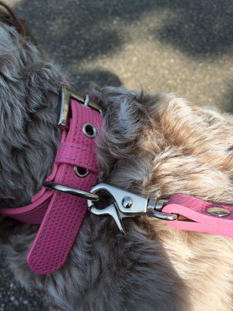 犬のリード1