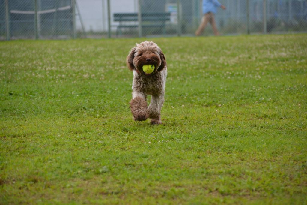 ボールを持ってくるAL